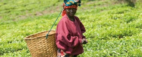 African woman working in tea field